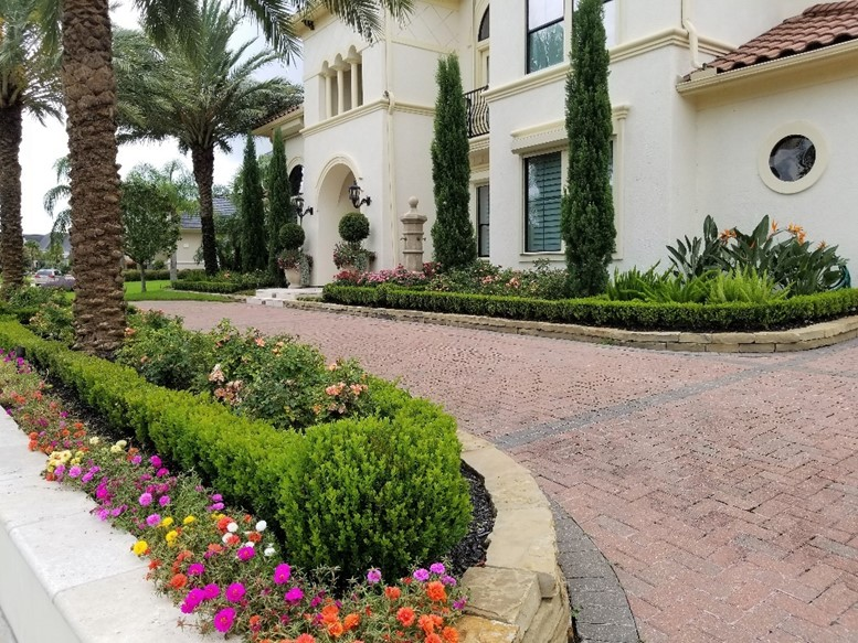 front yard design, Italian Cypress